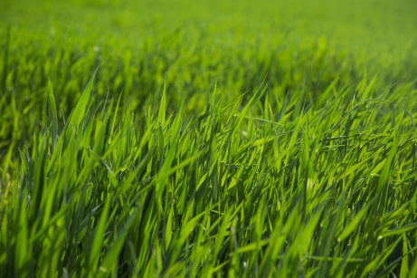 green-grass-1493898873qXe public domain photo