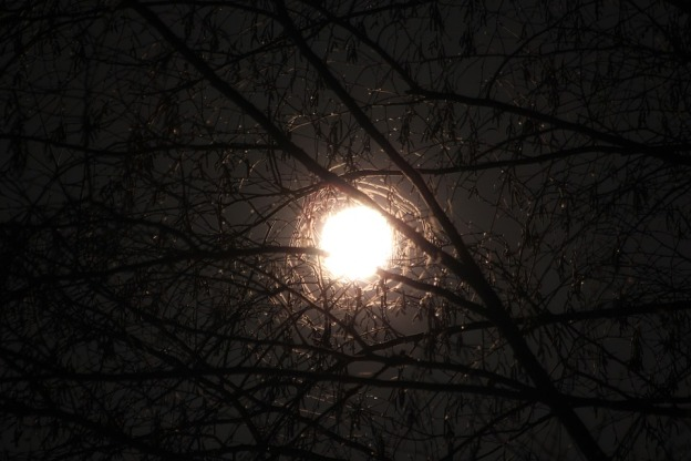 moon-through-branches-1170832_960_720